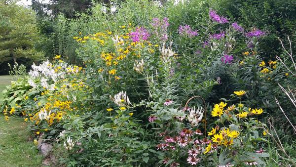 Photo of native plants in a garden